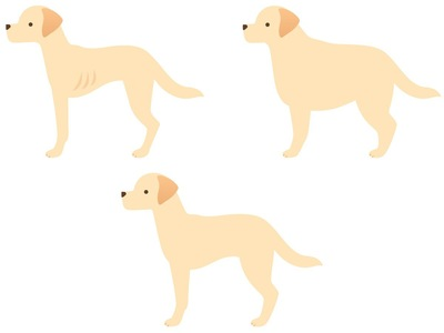 犬の体型3種