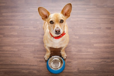 空のフードボールと空腹な犬