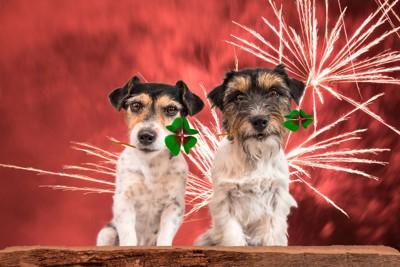 花火と2匹の犬