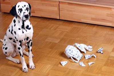 陶器を割ってしまった犬