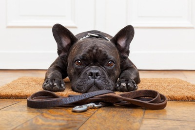 リードの前で伏せをする犬