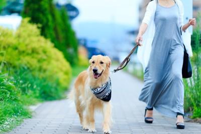 ゴールデンレトリバーを散歩する女性