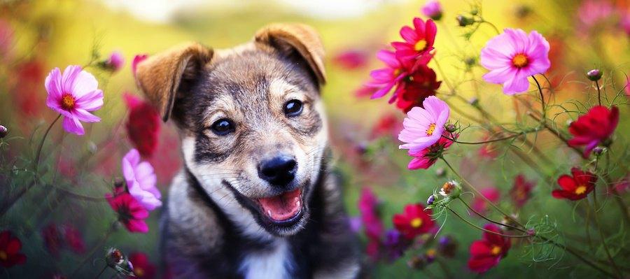お花畑で笑顔の犬