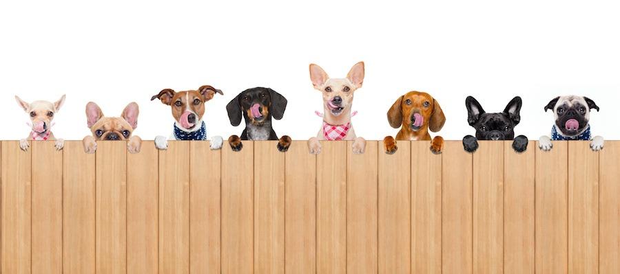 壁に手をかけて覗く様々な犬