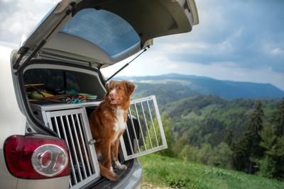 車内のケージから顔を出す犬