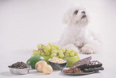 中毒性食材と犬