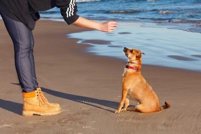 トレーニングしている犬