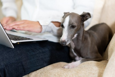 ノートパソコンを使用中の飼い主さんの横に座る犬