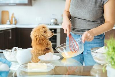 パンケーキを作る女性を見つめる犬