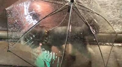 犬用の傘を見る飼い主さん