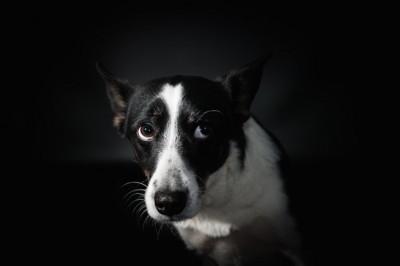 怖がって上目遣いをしている犬