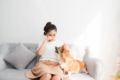 グレーのソファーに女性と犬