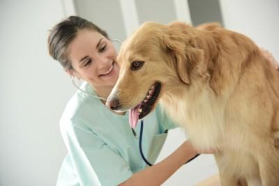 検査中の犬