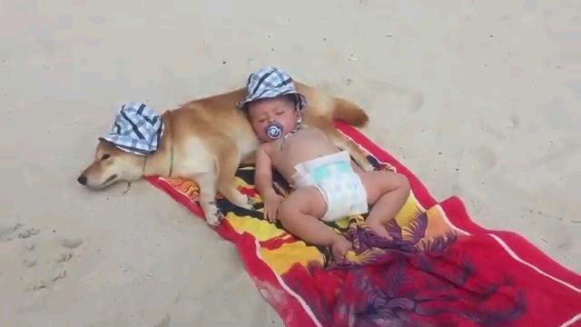 タオルの上で寝る赤ちゃんと犬