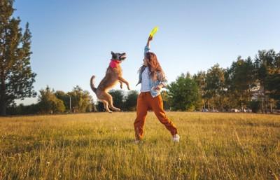 フリスビーを持つ女性と犬