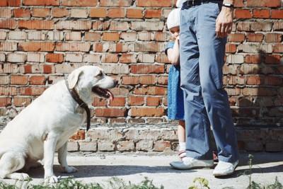犬が怖くて親の後ろに隠れる女の子