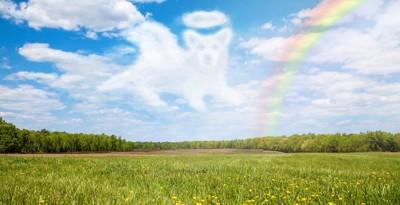 犬の形をした雲と青空と虹