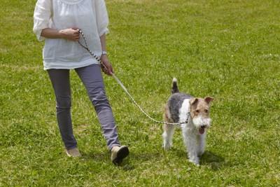 愛犬 散歩