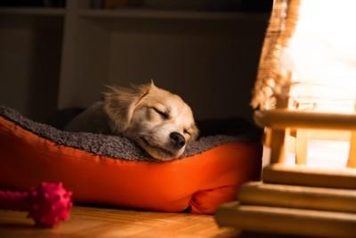 ベッドで眠る子犬