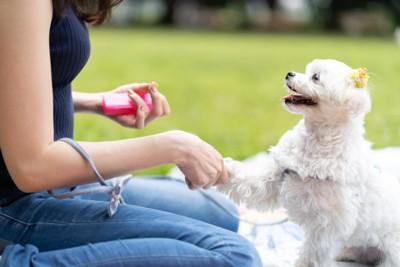 嬉しそうにお手をする犬