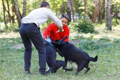 犬の喧嘩を止める人たち