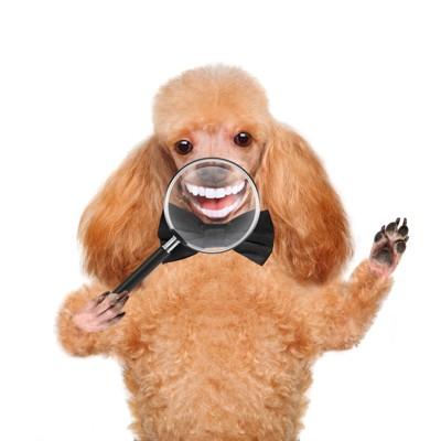 虫眼鏡で犬の口をアップ
