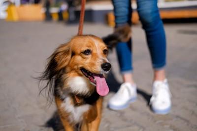 笑顔で舌を出す犬