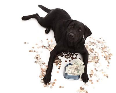 ご飯の器にお金を入れた犬