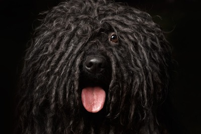 毛量が多い犬