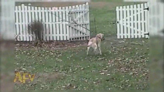 門へ向かう犬