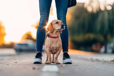 飼い主の足の間で周りを見渡す犬