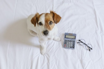 計算機とメガネのそばに座る子犬