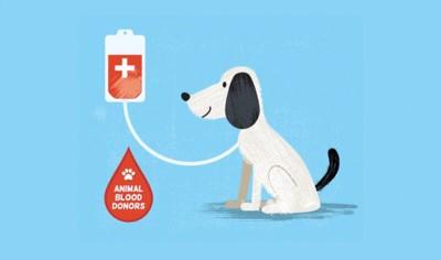 犬の献血ドナー