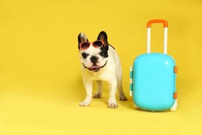 サングラスをかけてスーツケースの隣に立つ犬