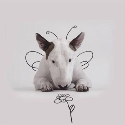 花を見つめるちょうちょ犬