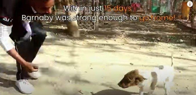 15日後の子犬