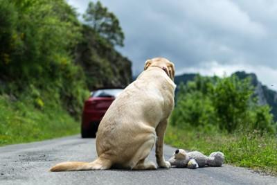 ぬいぐるみと一緒に道路に置き去りにされた犬