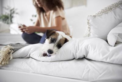 スマホをいじる女性と退屈そうに横たわる犬