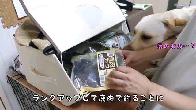 ランクアップして~字幕