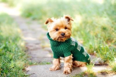 コスプレ衣装を着る犬