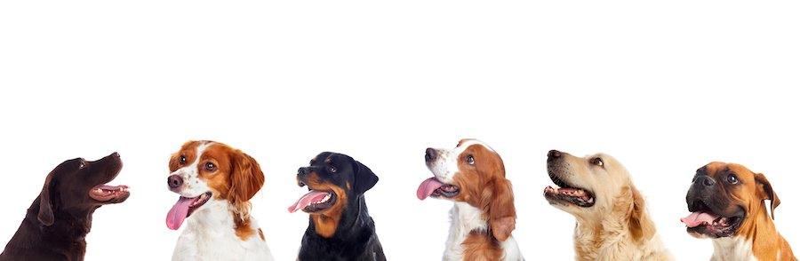 様々な種類の犬たちの顔