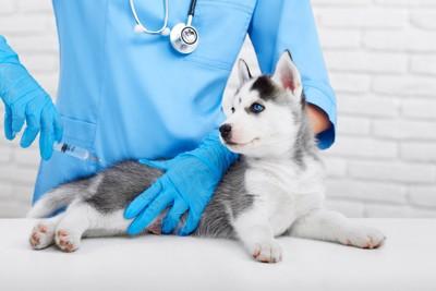 子犬と注射器を持つ獣医師