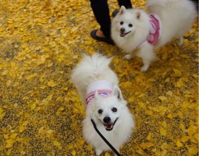 上を見上げる犬2匹