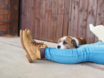 飼い主さんの足にあごを乗せている犬