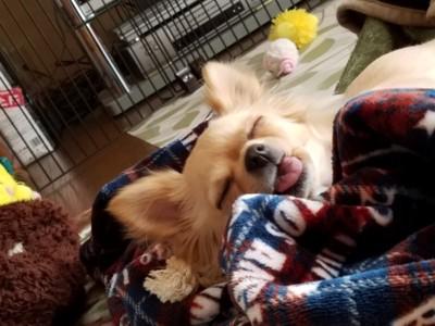 愛犬の変顔写真15枚目