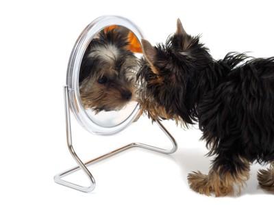 鏡をのぞき込む犬