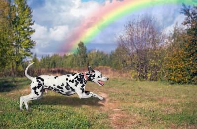 虹と走るダルメシアン