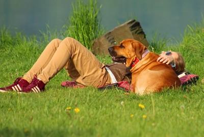 草むらでのんびり犬と女の子