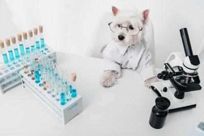 眼鏡をかけた犬と試験管と顕微鏡