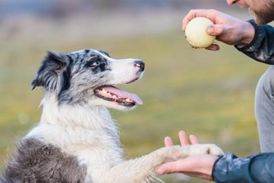 トレーニングする犬